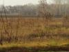 Необычное гнездо орлана недалеко от села и дороги, 2013 (Н. Борисенко)