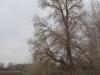 Гнездо хоть и расположено открыто, но труднодоступно, 2013 (Н. Борисенко)