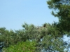Снизу в этом гнезде виден один птенец, 2012 (М. Гаврилюк)