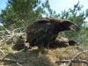Приятное удивление - птенец не один, их - три, 2012 (М. Гаврилюк)