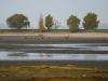 Скопление орланов-белохвостов на спущенном пруду. Фото А. Арапов