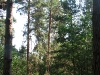 Многолетнее гнездо (окр. с. Лозивок Черкасской обл., июнь 2007 г.)