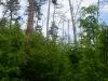 Гнездо среди зарастающей вырубки (окр. с. Худяки Черкасской обл., май 2010 г.)