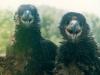Оперяющиеся птенцы (Каневский заповедник, май 2002 г.)