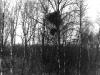 Гнездо орлана на тополе, нежилое. Под ним гнездо ворона (окр. с. Трахтемиров Черкасской обл., май 1995 г.)