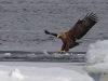 Посадка на лед
