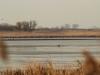Группа орланов на спущенном пруду (Н. Борисенко)