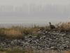 Туманное утро на прудах (Н. Борисенко)