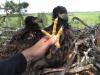 Зброя орланів