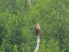 Орлан на присаді після трапези