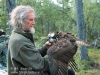 Известный финский исследователь хищных птиц П. Саурола и скопа со спутниковым передатчиком (фото  H.I. Saurola с сайта Finnish Museum of Natural History
