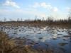 Полесское болото