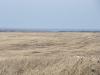 Заброшенные поля