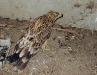 В таких условиях содержится могильник у фотографа, Крым