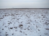 Зимний пейзаж охотничьей территории большого подорлика в Бебжанском НП