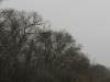 Гнездо орлана у Березанского лимана. Фото З. Петровича