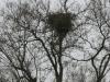 Жилое гнездо орлана у Березанского лимана. Фото З. Петровича