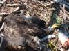 Одне пташеня відпочивало після трапези