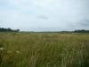 Ко второй половине лета растительность на болоте сильно поднялась