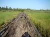 Деревянная кладка через участок болота