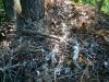 Останки птенца большого подорлика, убитого куницей, в гнезде