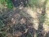 Упавшее гнездо большого подорлика, где весной была кладка