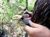 Первый украинский подорлик, помеченный пластиковым кольцом