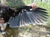 Нижняя часть крыла