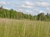 Фотография с болота Галы у оз.Сомино
