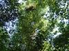 Свежее гнездо большого подорлика, расположенное на лесном острове в южной части Ольманских болот у белорусской границы