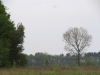 Гнездовое дерево курганника