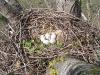 Осмотр гнезда курганника