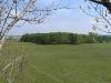 Вид с гнездового дерева курганника