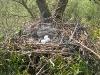 Гнездо №1 и кладка