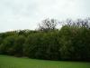 Гнездо курганника на дубе (окраина лесного массива)