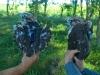 Пташенята балабана з передатчиками фірми Ecotone, які важать лише 17 г