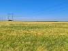 Гніздові біотопи українських балабанів