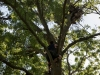 Перевірка гнізда на дереві