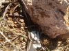 Передавач, знайдений на місці відлову балабана в Туреччині