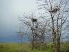 Нежилое гнездо курганника