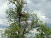 Жилое гнездо курганника №3
