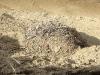 Кладка пустельги в старом гнезде ворона
