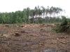 26.07.09 : вырубка проведена в 200-х метрах от жилого гнезда змееяда. Фото Письменного К.А.