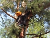 Олександр Добринський перевіряє гніздо