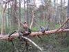 Перше знайомство Тараса Крульського із совою бородатою