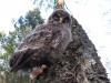 Пташенята добре лазять по деревах