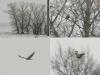 Курганник - первая встреча на зимовке в Черкасской области