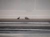 Молодые орланы ''сообразили на троих'' (Р.Ватрасевич)